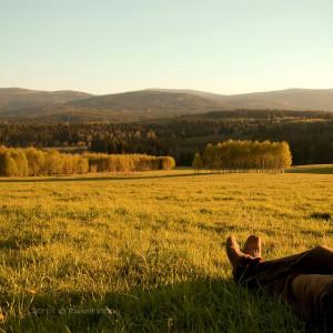 Relaxation - farm